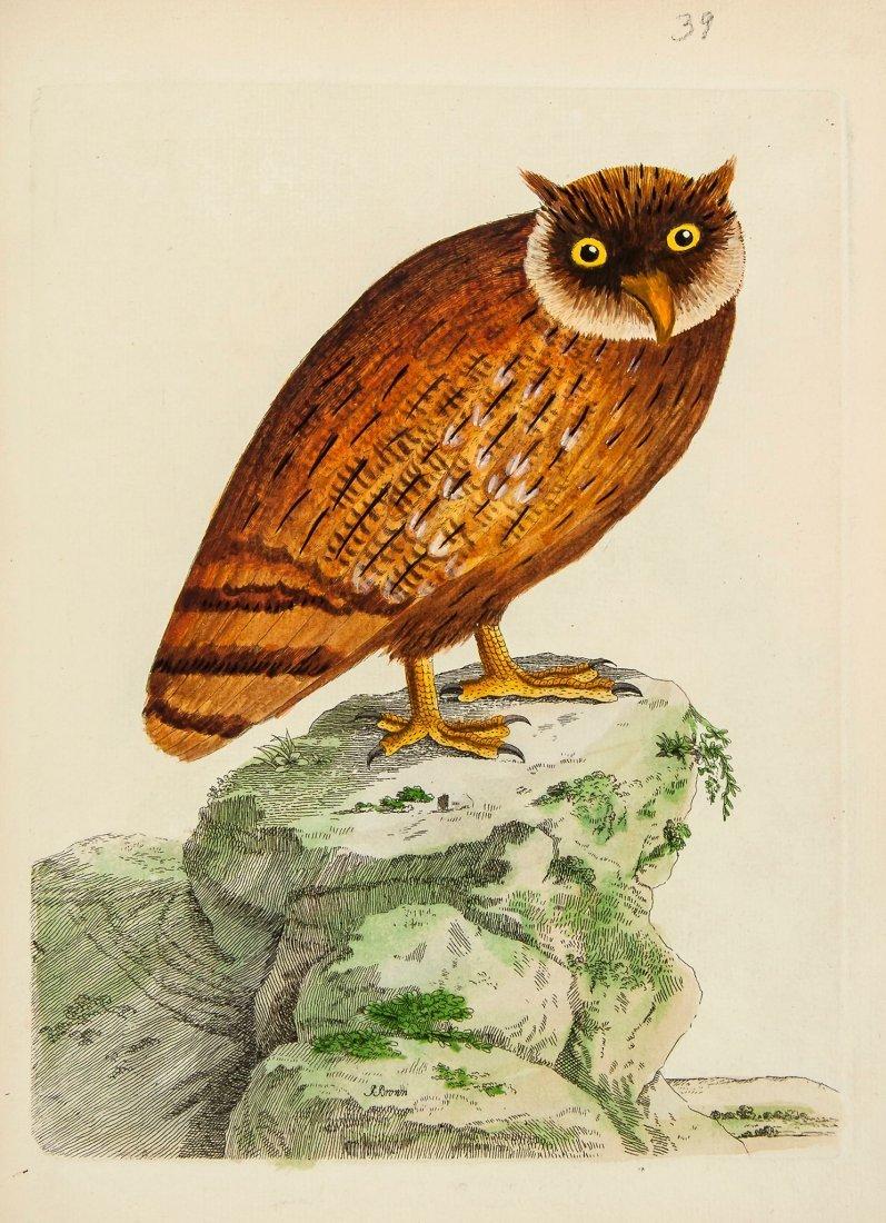 Brown (Peter) - Nouvelles Illustrations de Zoologie,