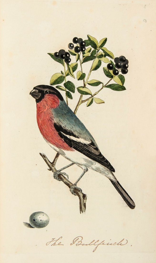 Cotton (John) - The Resident Song Birds of Great