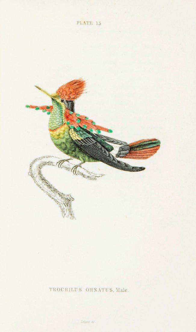 The Naturalist's Library, Ornithology, Hummingbirds 2