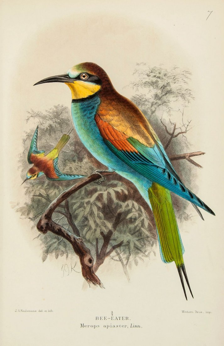 Coloured Figures of the Birds of the British Islands, 7