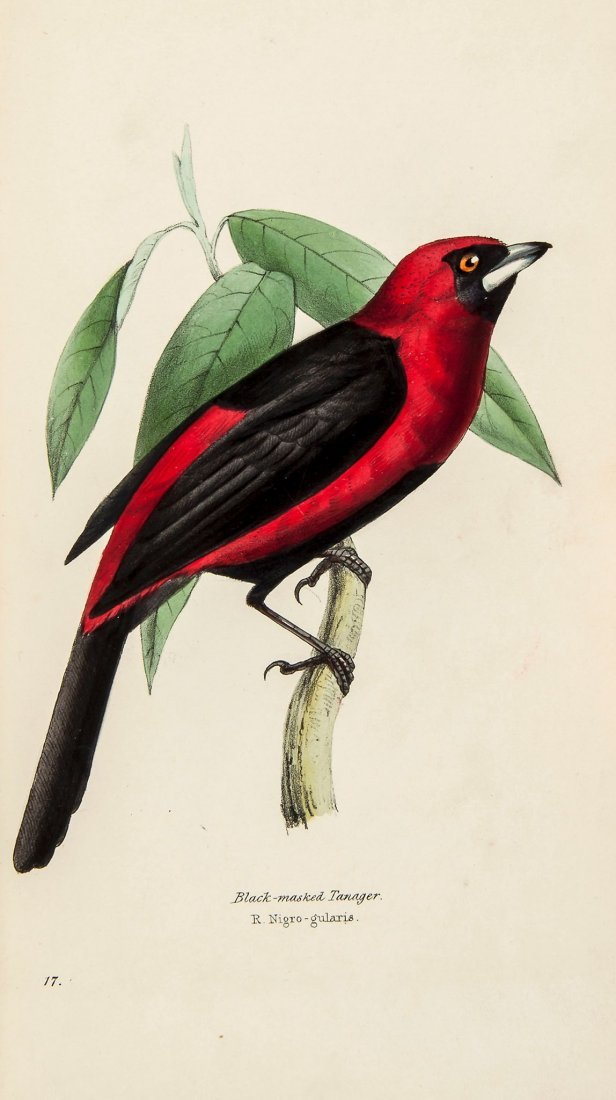 Swainson (William) - A Selection of the Birds of Brazil