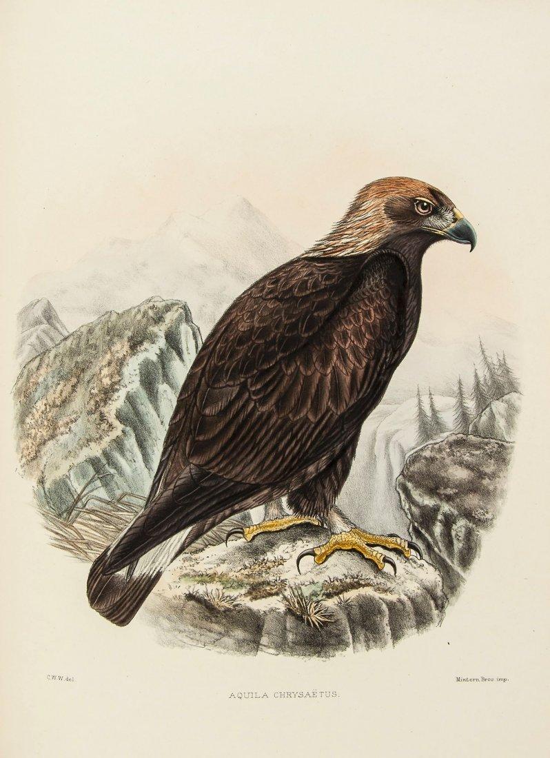Wyatt (Claude W.) - British Birds,