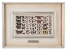 Graham Clarke (b.1941) - British Butterflies