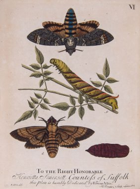 Albin (eleazar) - A Natural History Of English Insects,