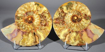82B: A PAIR OF AMMONITES
