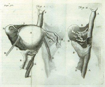 21C: Giffard (William) Cases in Midwifery