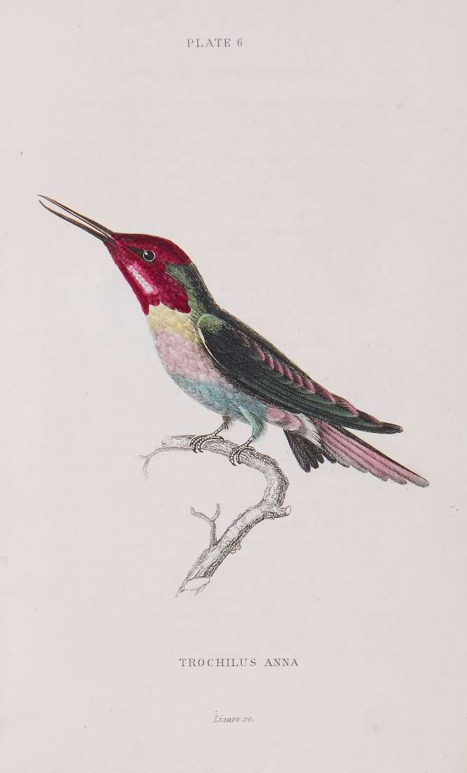 Jardine (William) - The Natural History of