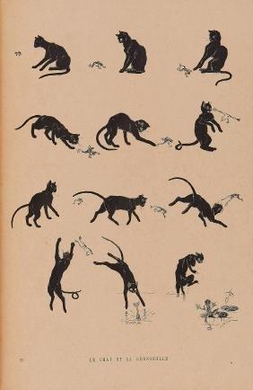 Cats.- Steinlen (Théophile A.) - Des Chats: Images
