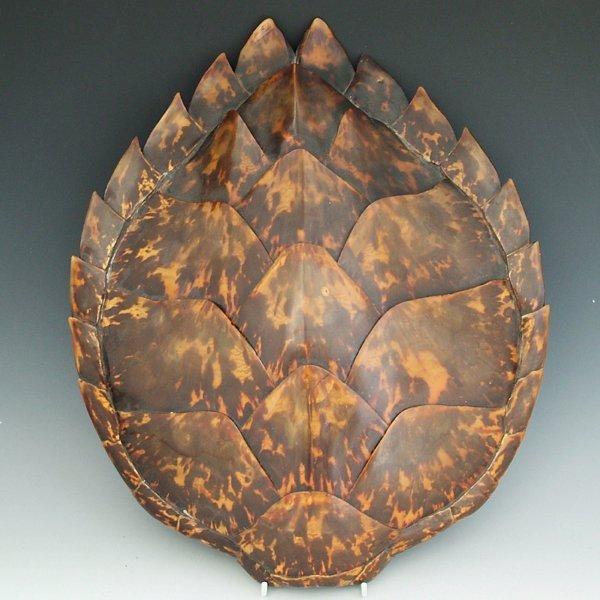 362: Hawksbill turtle carapace, length 46cm.