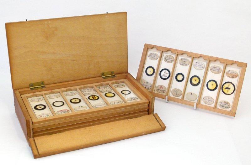 Microscope slides (professional) many whole specimens
