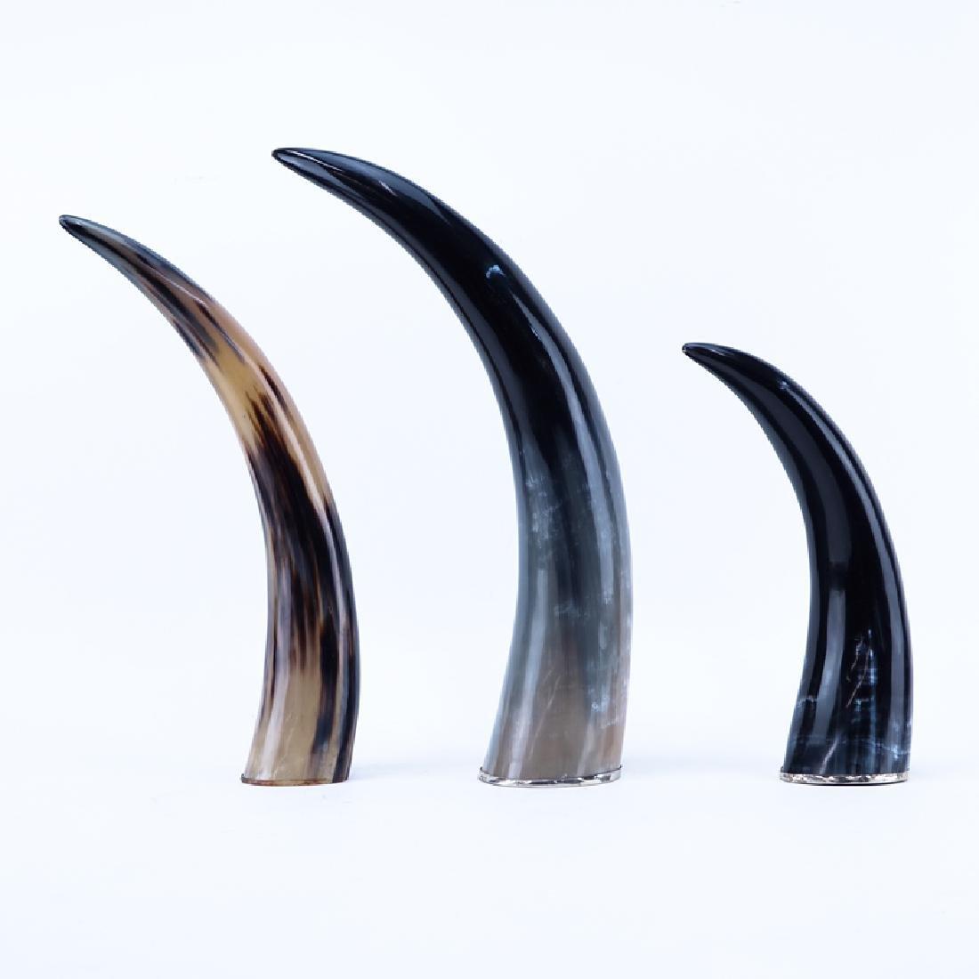 Set of Three (3) Decorative Polished Horns