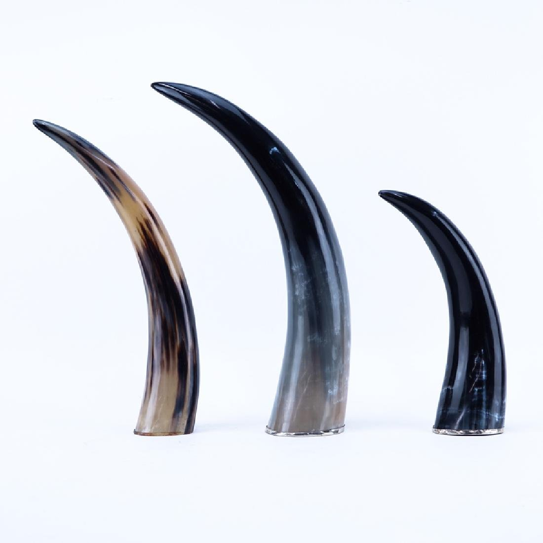 Set of Three (3) Decorative Polished Horns