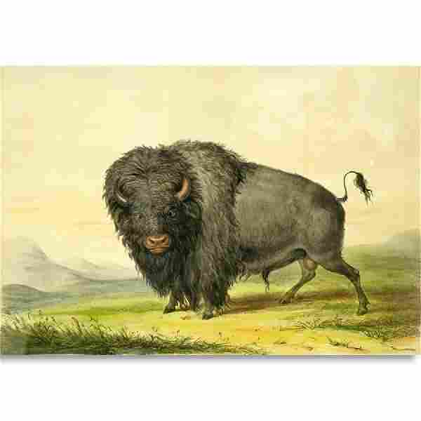 After: George Catlin, American (1796 - 1872) Color