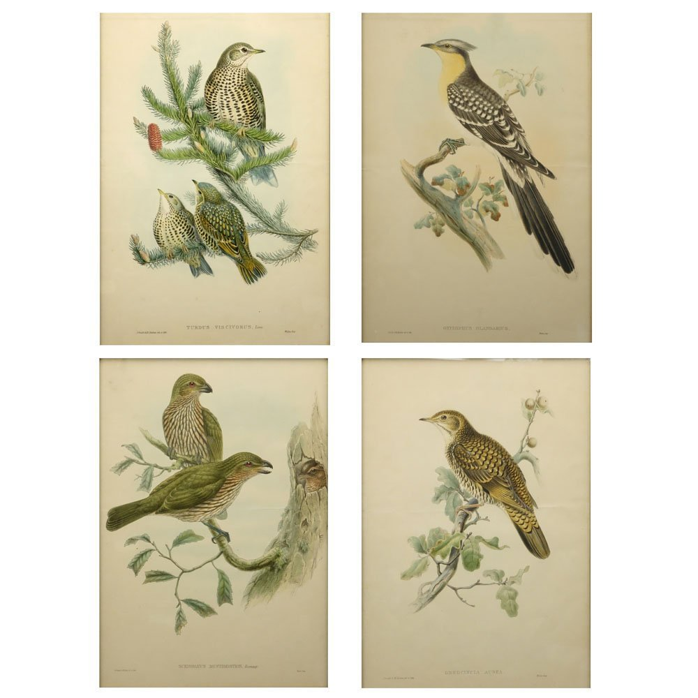 Grouping of Four (4) John Gould, English (1804-1881)