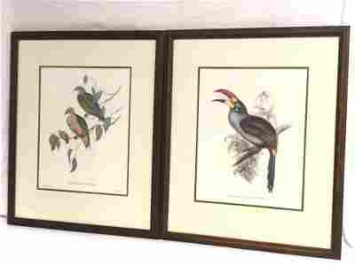 (2)John Gould & HC Richter Color Lithographs -