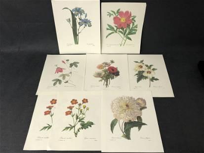 (8)P.J.Redoute Botanical Flower Prints - Unframed