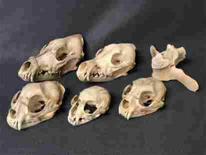 Asst Taxidermy Skulls, Bone