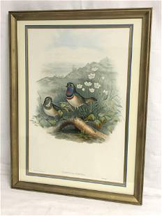 John Gould(1804-1881)Bird Lithograph - Red Spotted Blue