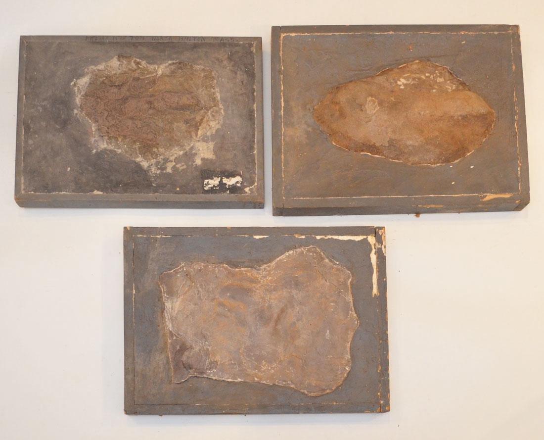 3 Mt. Tom MA Dinosaur Fossil Footprints