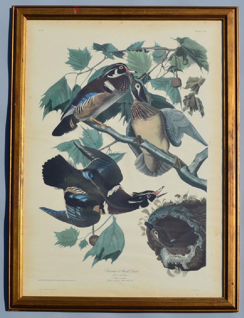 Antique Audubon Summer Ducks Large Print