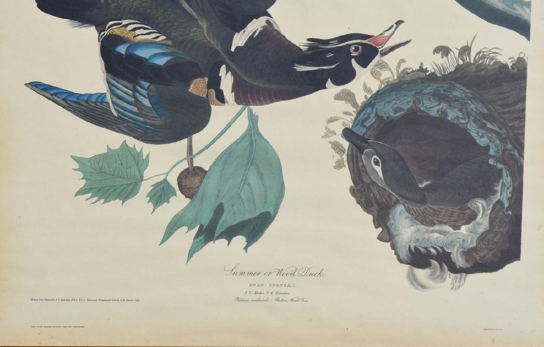 Antique Audubon Summer Ducks Large Print - 3