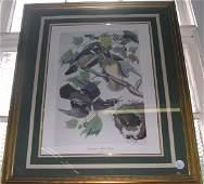 1164: After John James Audubon (American, 1785-1851)
