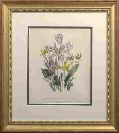 After Jane Webb Loudon (British, 1807-1858),