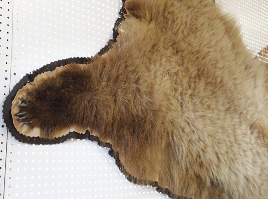 1071: Taxidermy-Mounted Grizzly Bear Rug, - 5