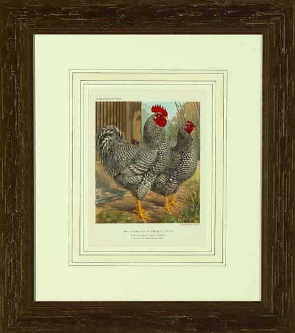 "513: British School (19th Century) ""Farm Raised Birds"""