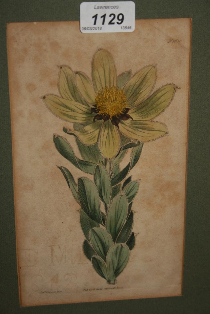 Set of four antique hand coloured botanical prints by