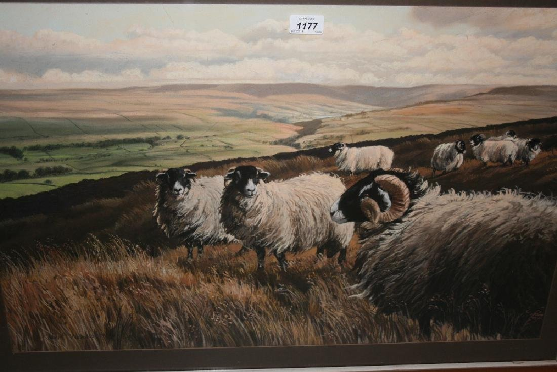 Robert Nicholls, watercolour, sheep in Swaledale,