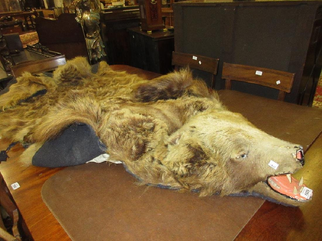 Early 20th Century taxidermy grizzly bear skin rug with