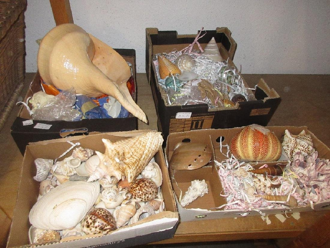 Extensive collection of seashells including a large - 2