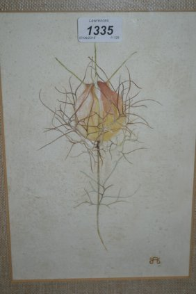 Tempera Painting, Study Of A Flower Bud, Bearing