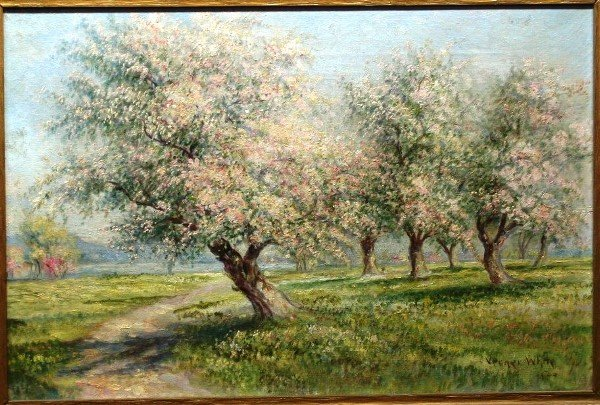 25: Verner White, Cherry Blossoms