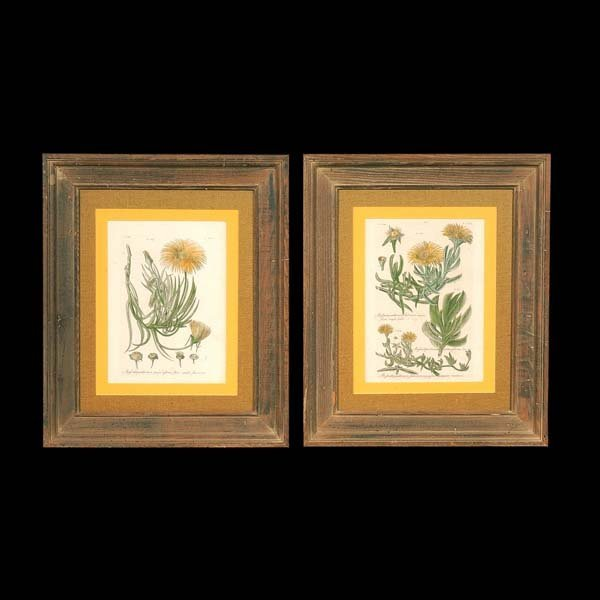 "438: Two custom framed prints of flowers, 25-1/2"" x 21-"
