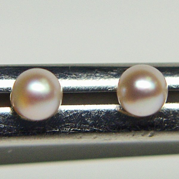 5020: 14KT 6mm Pearl Stud Earrings