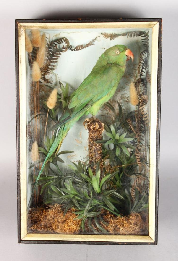 A 19TH CENTURY PARROT in a glass case.