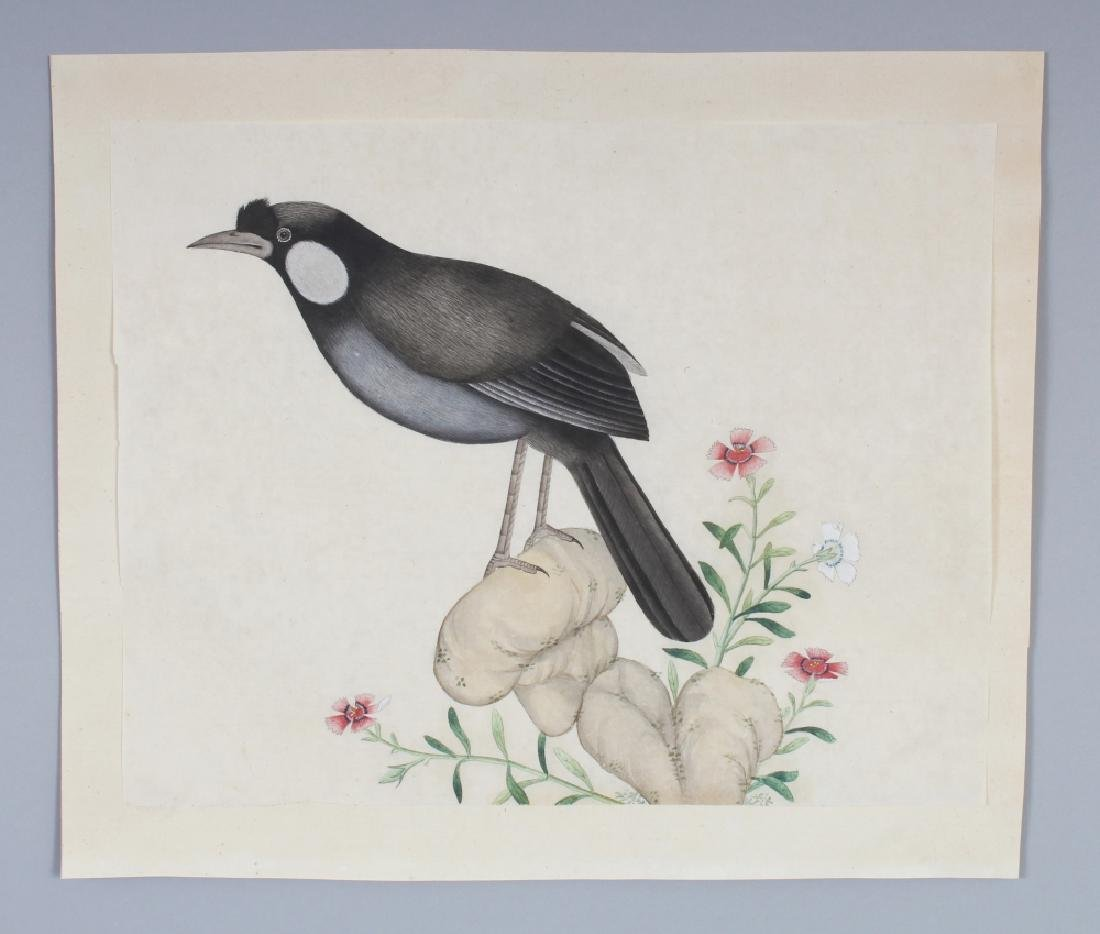 A GOOD QUALITY 19TH CENTURY CHINESE PAINTING ON PAPER