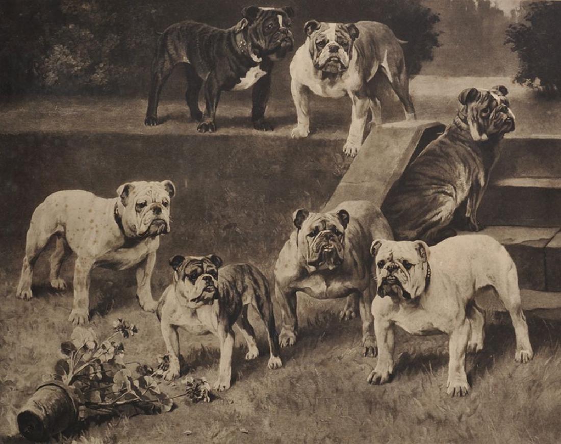 "Arthur Wardle (1864-1949) British. ""Bull-Bitches of the"