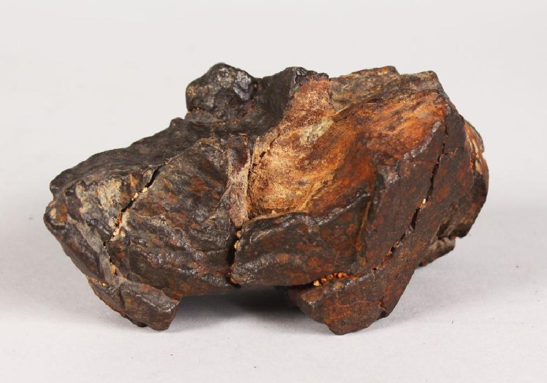 A METEORITE recovered from the Sahara Desert.  5ins
