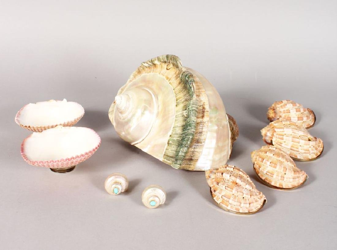 A LARGE CONCH SHELL, pair of shells with silver bases