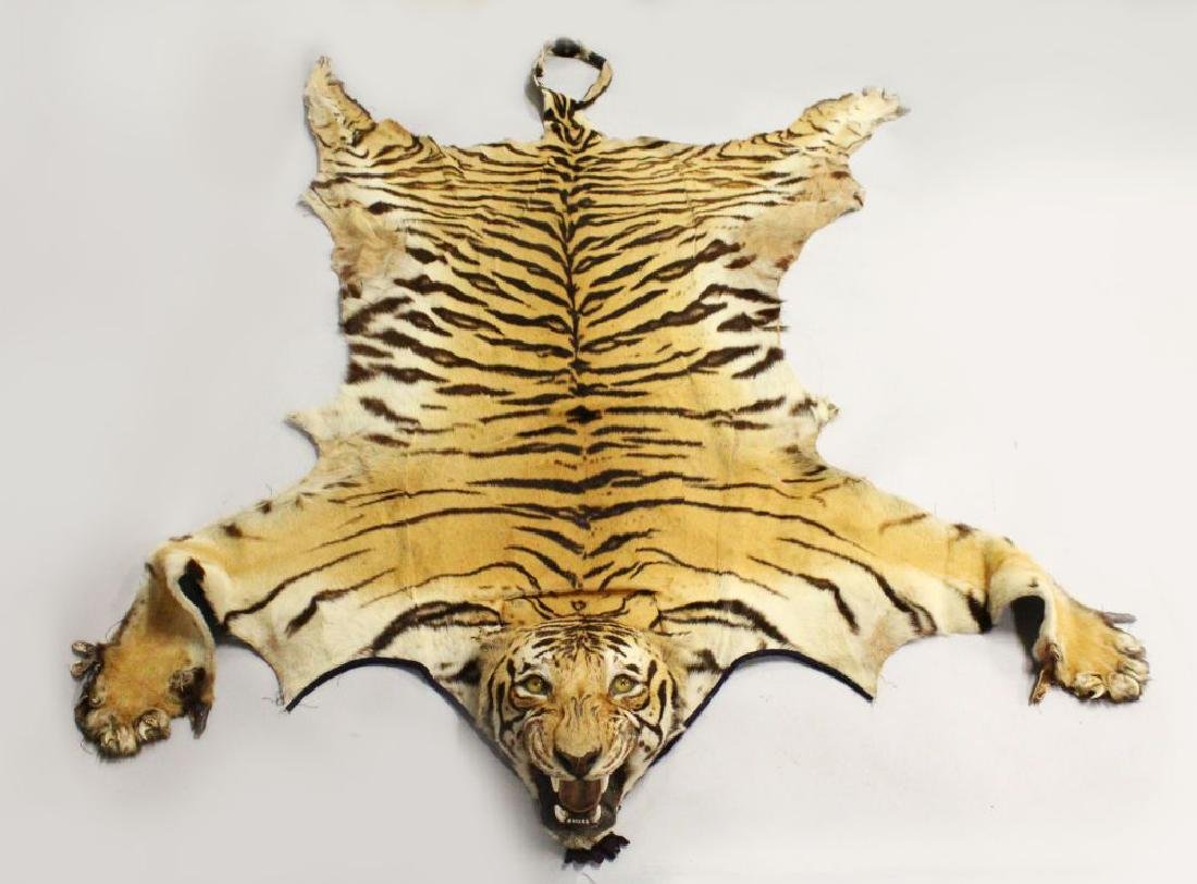 A LATE 19TH/EARLY 20TH CENTURY TIGER SKIN  The mounted