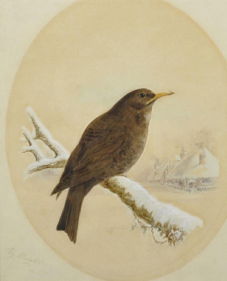 "Harry Bright (1846-1895) British. ""Blackbird"","