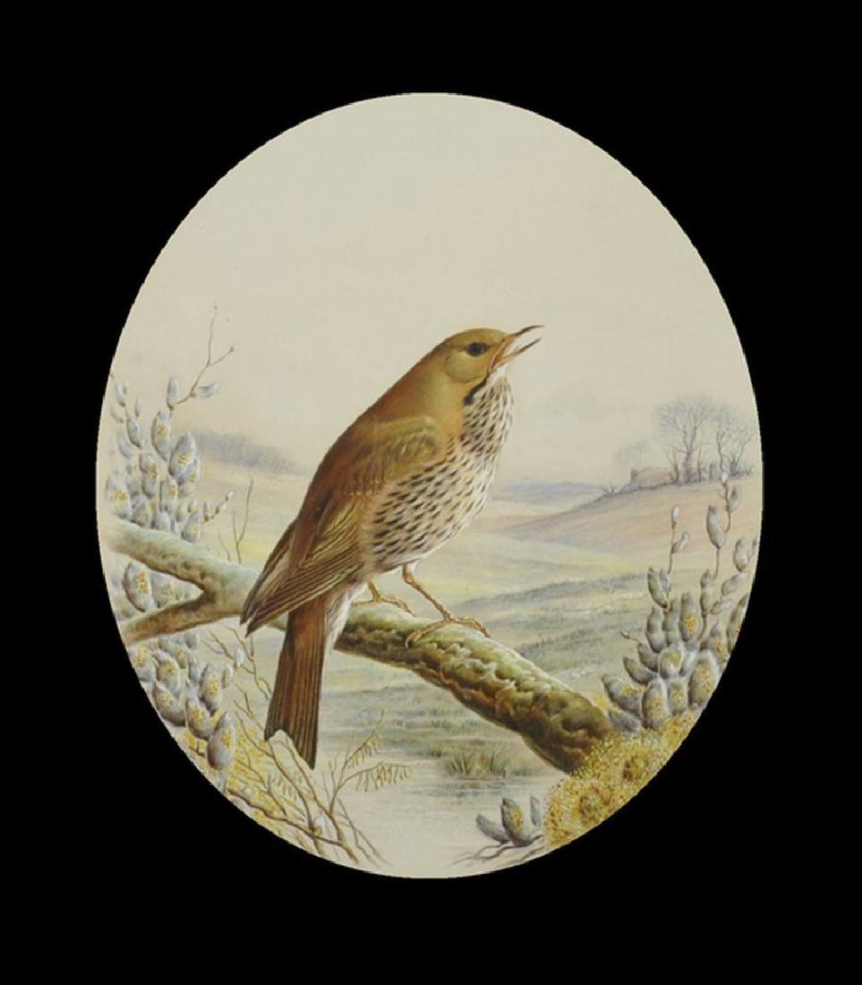 "Harry Bright (1846-1895) British. ""A Thrush on a Branch"