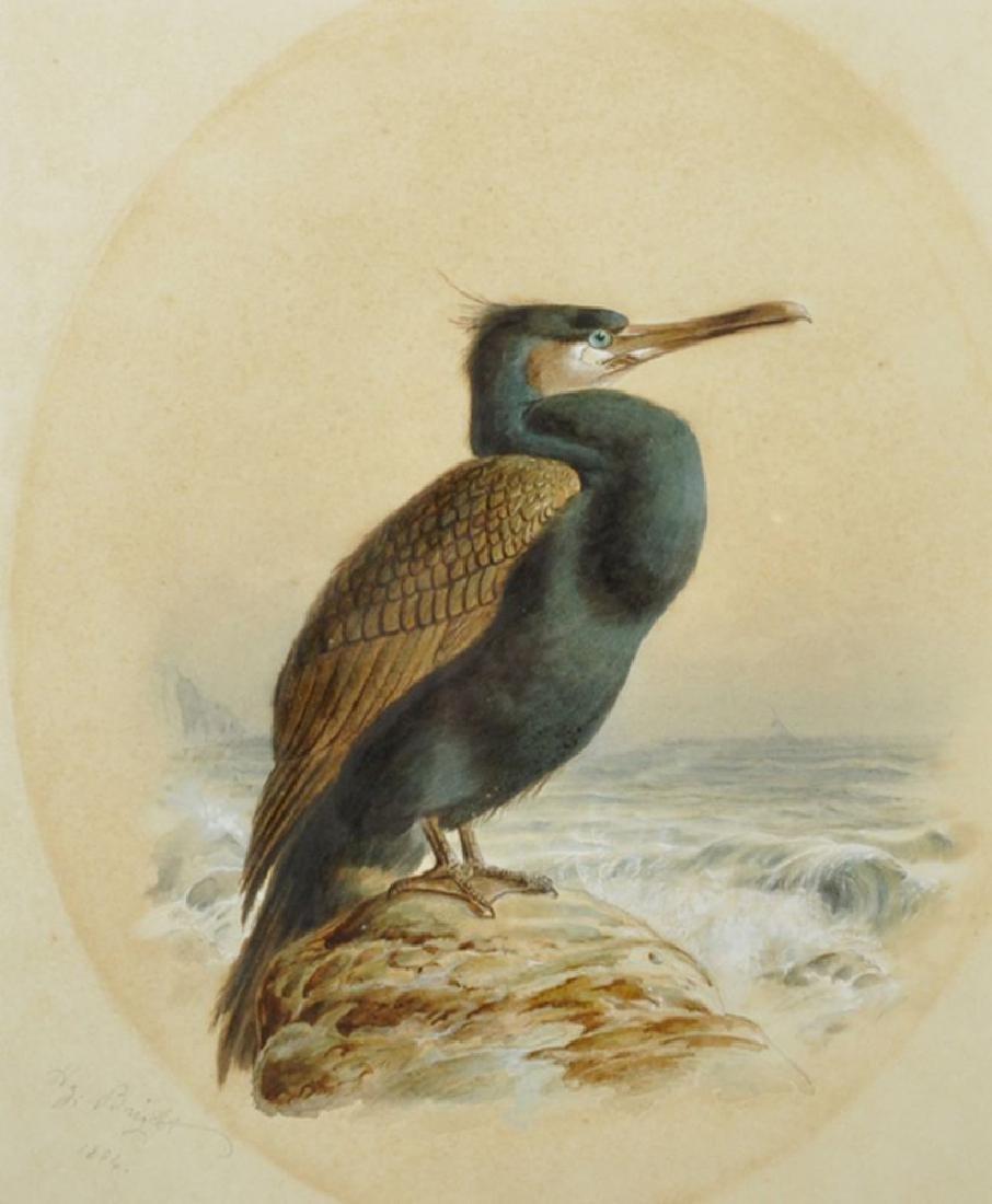 "Harry Bright (1846-1895) British. ""Cormorant"","