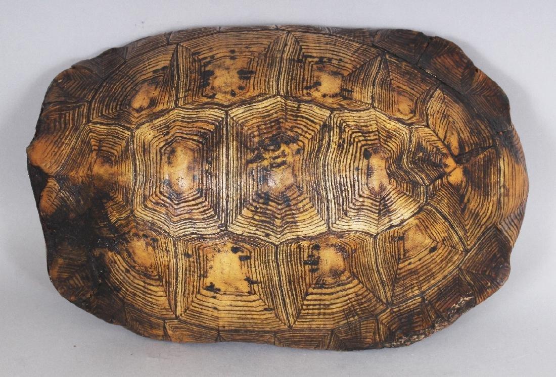 AN UNUSUAL TIBETAN SILVER-METAL LINED TORTOISE SHELL - 5