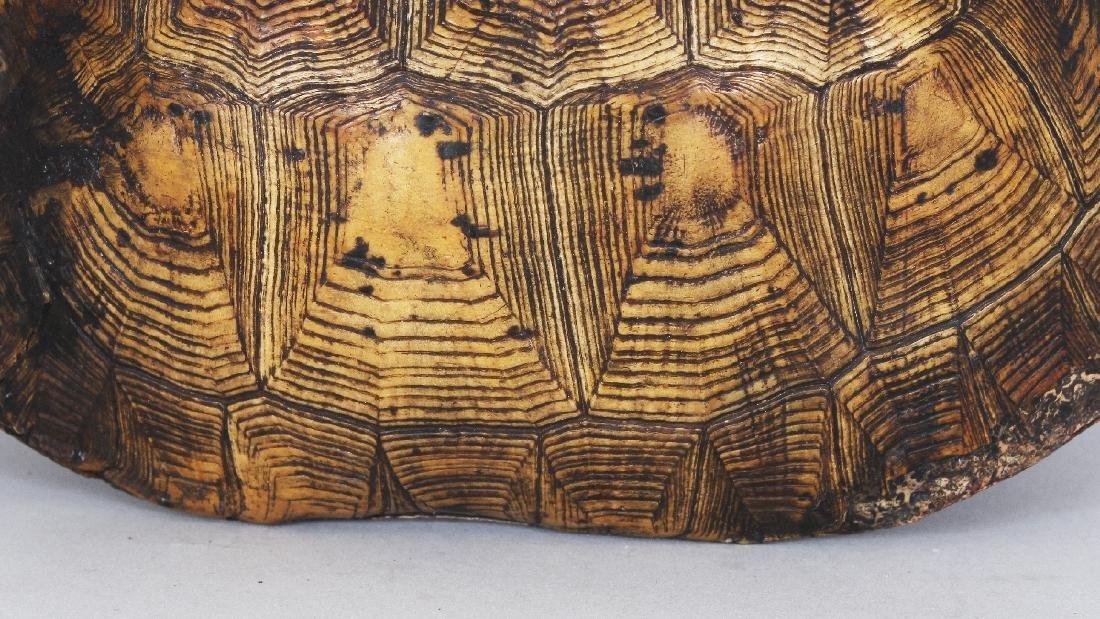 AN UNUSUAL TIBETAN SILVER-METAL LINED TORTOISE SHELL - 6