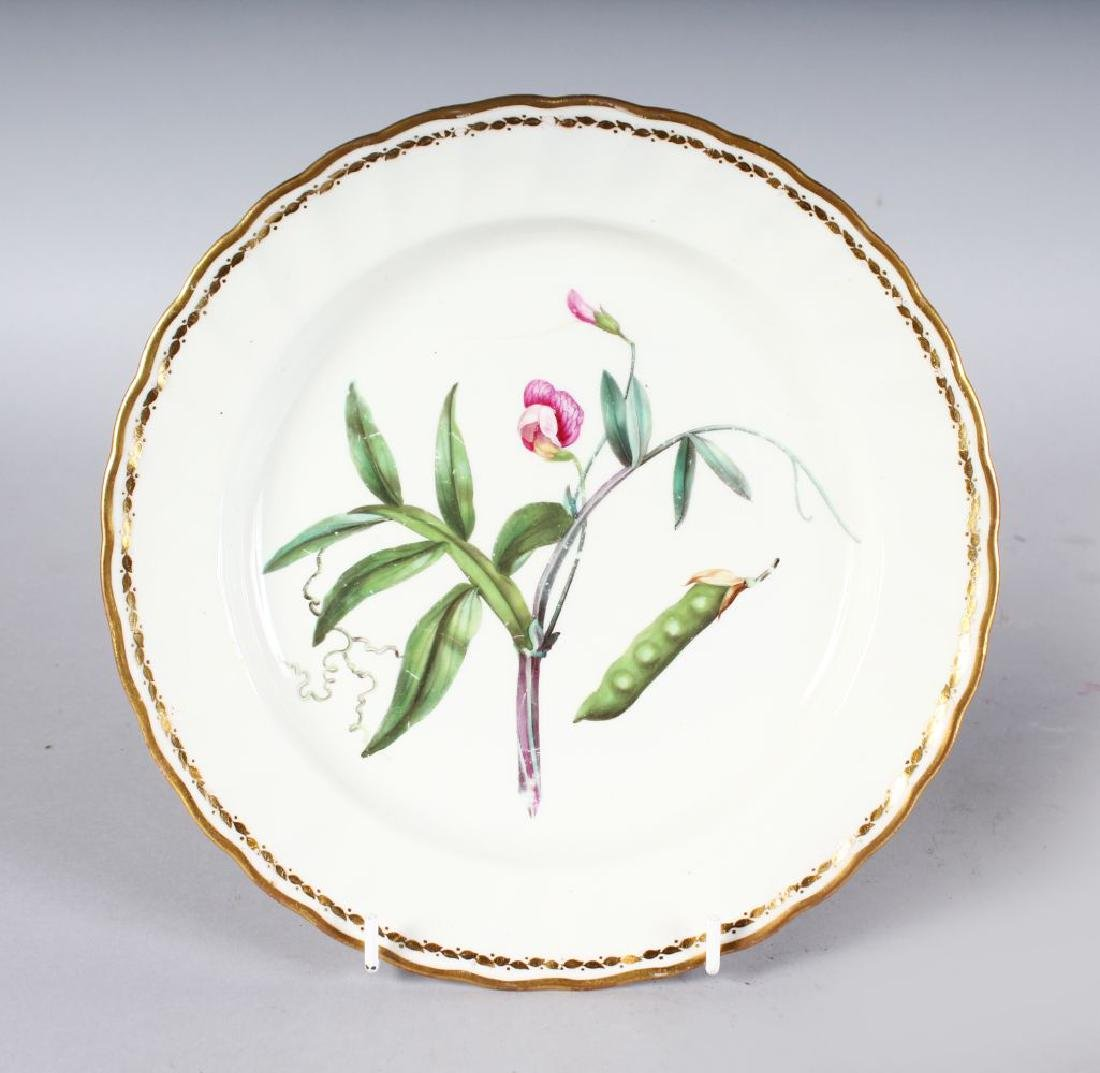 N 18TH CENTURY DERBY BOTANICAL PLATE painted with