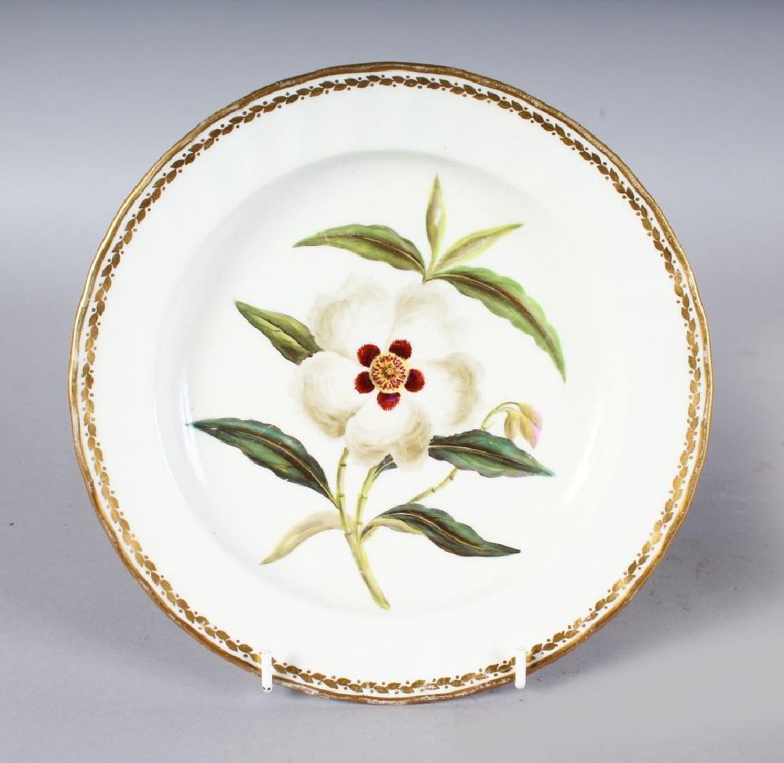 AN 18TH CENTURY DERBY BOTANICAL PLATE painted with 'Cis